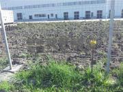 Teren de vanzare in Apahida zona compex logistic Nervia